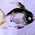 Echo Fish Fourteen by J Vincent Scarpace