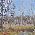 Edge Of The Marsh by Robert P Hedden