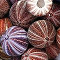 Edible Sea Urchin Souvenirs by Dr Keith Wheeler