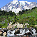 Edith Creek Mt Rainier Wa by Samantha Panzera