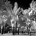 Eerie Palm Trees by Yali Shi