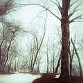 Eerie Winter Woods by Jill Battaglia