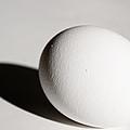 Egg by Jarrod Erbe