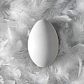 Egg On Feathers, Conceptual Image by Paul Biddle