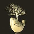 Egg Tree  by Ann Powell