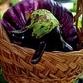 Eggplants From Sicily by Caroline Stella