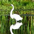 Egret 5 by Joe Faherty