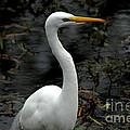 Egret by David Weeks