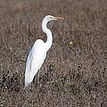 Egret by Eric Tressler