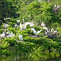 Egret Estuary by Suzanne Gaff