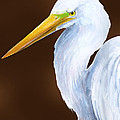 Egret Head Study by Kevin Brant
