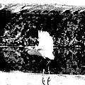 Egret In Flight V5 by Douglas Barnard