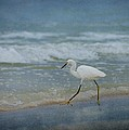 Egret by Sandy Keeton