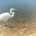 Egret Stroll by Karol Livote