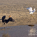 Egret Territory by Stephen Whalen