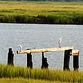 Egrets In The Salt Marsh by Bill Cannon