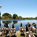 Egyptian Geese by Fabrizio Troiani