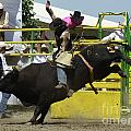 Rodeo Eight Seconds by Bob Christopher