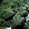 El Yunque National Forest Rocks And Waterfall by Thomas R Fletcher