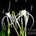 Elaines Flowers by Keri West