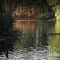 Elder Lake by Kim Henderson
