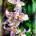 Elegant Beallara Orchid by Susan Savad