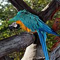 Elegant Parrot by Karen Harrison