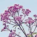 Elegant Pink Flowers. by Kimberly Teebagy