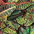 Elena's Crotons by Marionette Taboniar