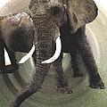 Elephant Awake by Colette V Hera  Guggenheim