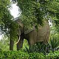 Elephant Beauty by Cherie Richardson