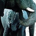 Elephant Care by Colette V Hera  Guggenheim