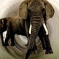 Elephant Chat  by Colette V Hera  Guggenheim