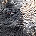 Elephant Close-up Portrait by Johan Larson