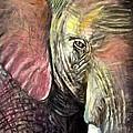 Elephancy by Steve Leibowitz