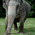 Elephant Greet by Colette V Hera  Guggenheim