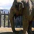 Elephant by Henrik Lehnerer