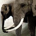 Elephant Meet by Colette V Hera  Guggenheim