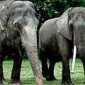 Elephant Meeting by Colette V Hera  Guggenheim