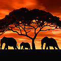 Elephant Sun Set by Walter Colvin