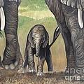Elephant Trio by Patty Vicknair