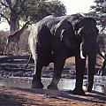 Elephants by Gerrit De Lange