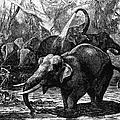 Elephants by Granger