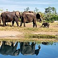 Elephants by Jenny Hudson