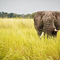 Elephants Of Botswana by Tara Moayed