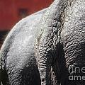 Elephants Rear by Juan Silva