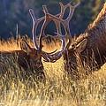 Elk 2 Elk by James Anderson
