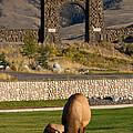 Elk At Yellowstone Entrance by Sue Karski