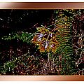Elwha Leaf by Marie Jamieson