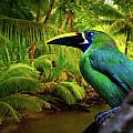 Emerald And Blue Toucan  by Harry Spitz